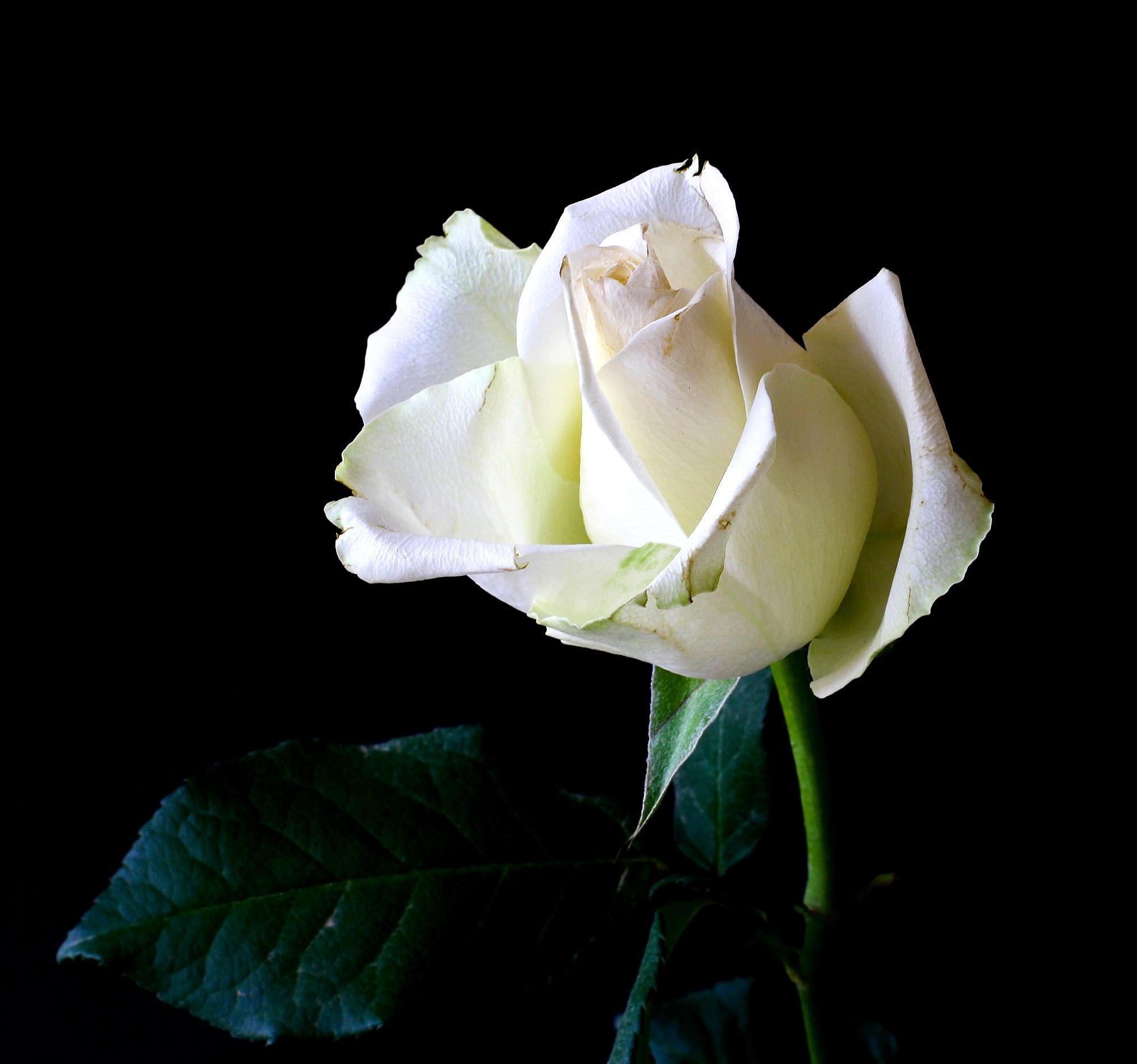 bloom-blossom-flower-36420.jpg